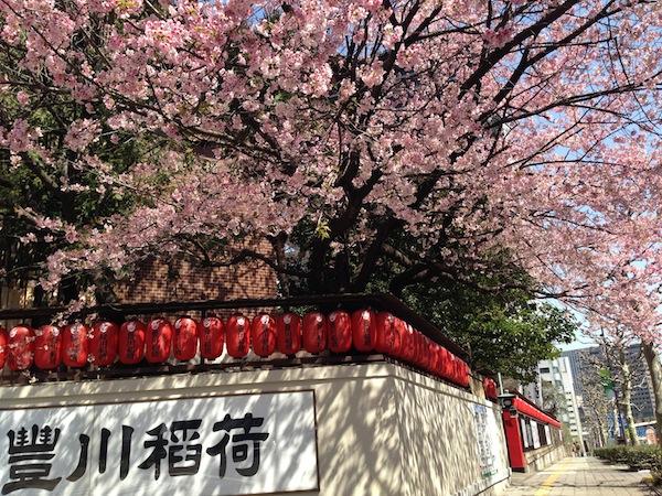 floraison-cerisier-tokyo-japon-universpartages